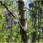 {barganews_flowers } Spring flowers in Barga