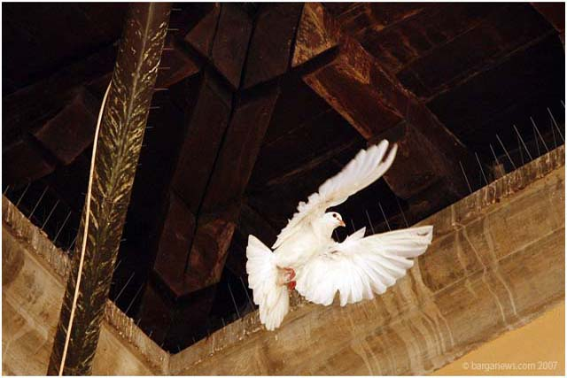 Pigeons return to Palazzo Pancrazi